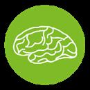 Mozek a nervy