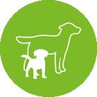 Štěňata a starší psi