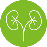 Kidney and exretion